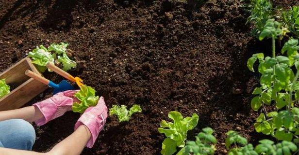 Ocak ayında tarlada, bahçede yapılacak işler neler? Ocak'ta hangi sebze, meyveler ekilir, dikilir?