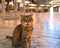 Ayasofya'nın ünlü kedisi Gli yaşamını yitirdi