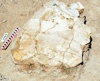 Kayseri'de bulundu! Tam 7,5 milyon yıllık!