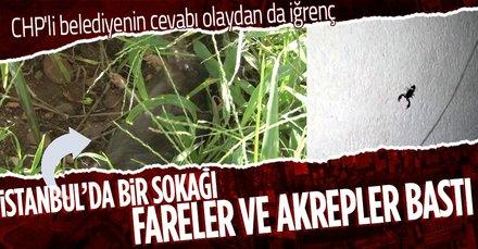 İstanbul Sarıyer Mühendis Şevket Sokağı'nı akrepler ve fareler bastı! CHP'li Sarıyer Belediyesi ve İBB müdahale etmiyor