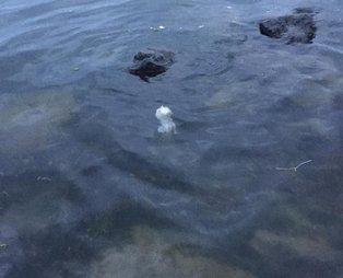 Sahilde yürüyüş yapanlar fark etti! Denizde cenin bulundu