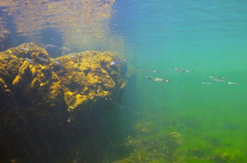 Bafa Gölü'nün su altı zenginliği kayda alındı