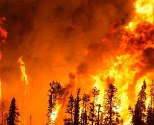 """İçişleri Bakanlığı, 81 il valiliğine """"Ormanlık alanlarda ateş yakılmaması""""  konulu genelge gönderdi"""