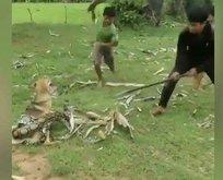 Yılan evcil köpeğe saldırdı! Dehşet dolu anlar...