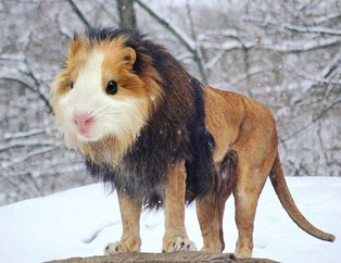 Hibrit hayvanların bu görüntülerine inanamayacaksınız!