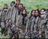FETÖ, PKK ile anlaşmak için MİT'çileri deşifre etmiş!