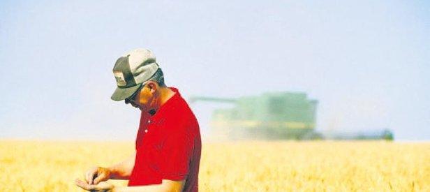 Torku buğday üreticisinin yanında