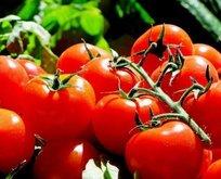 Kemik erimesine domates