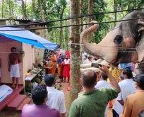 Fil ölen bakıcısını son kez görmek için kilometrelerce yürüdü