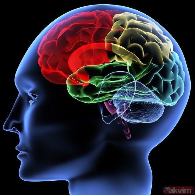 Bu yiyecekler beyni geliştiriyor! İşte beynimize iyi gelen besinler