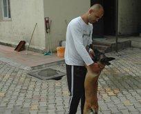 Polis, çalınan köpeği 160 kilometre iz sürerek buldu