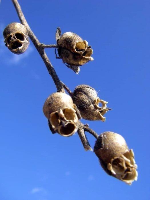 Dünyanın en korkutucu bitkileri