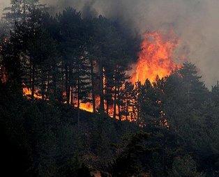 Son dakika: Bakan Bekir Pakdemirli duyurdu: 14 yangının 10'u kontrol altına alındı
