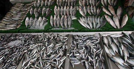 Tekir, Kefal, Lüfer, Hamsi, Çipura, Mezgit, Palamut balık türleri ve en lezzetli zamanları! Hangi balık ne zaman yenir?