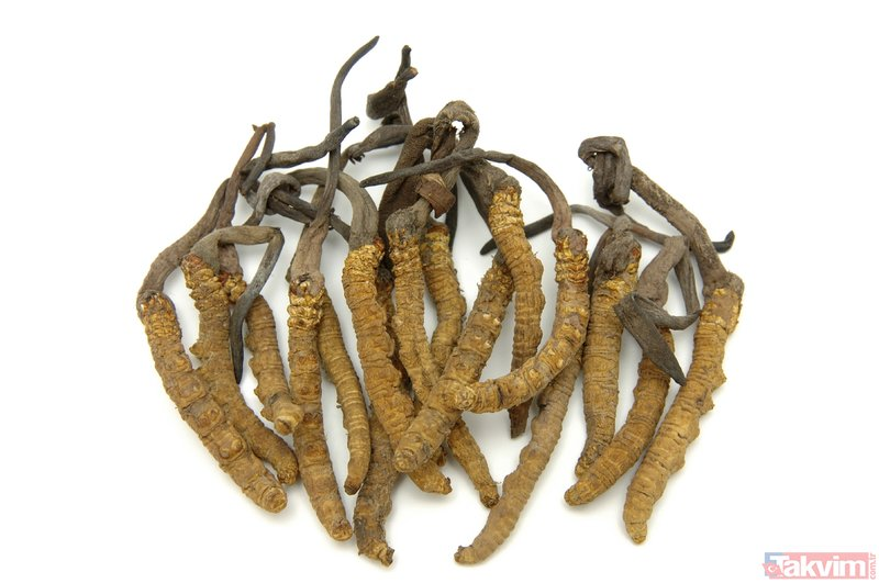 Mucizevi besin: Tırtıl mantarı! İşte kilosu 20 bin dolar olan kordiseps mantarının faydaları...