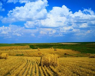 Çiftçiliğe merakı olanlar dikkat! Satışa çıktı..