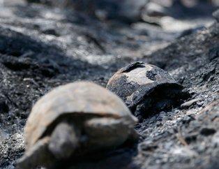 Muğla´daki orman yangını söndürüldü