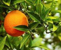 Kansızlığa portakal