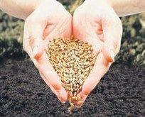 115 bin tohum koruma altında