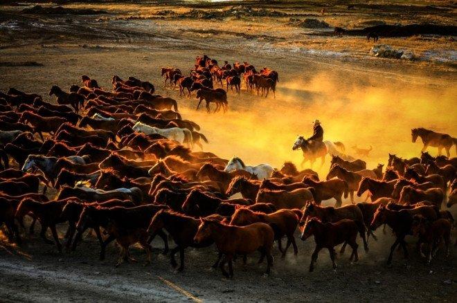 Kayserideki yılkı atları görenleri hayran bıraktı