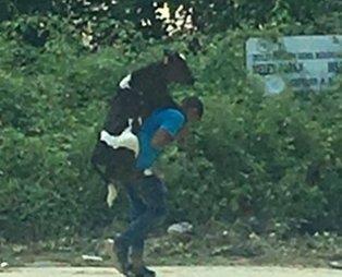 Düzce'deki selde yaralanan buzağıyı sırtında taşıdı