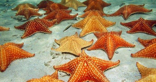 Rüyada deniz yıldızı görmek ne anlama gelir? - Takvim