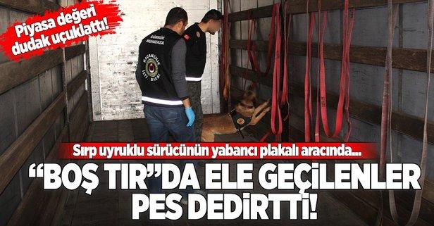 Yabancı plakalı tırda uyuşturucu zulası!
