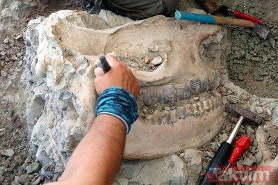 Çankırı'da 8,5 milyon yıllık fosil bulundu!