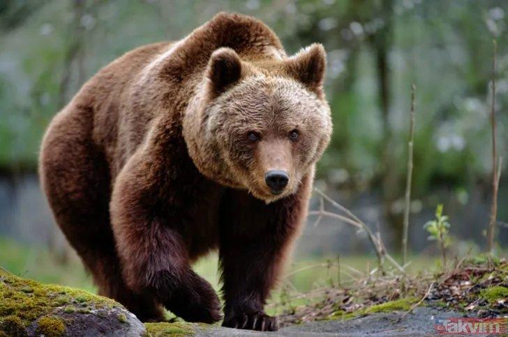 Kan donduran görüntüler... Kafese giren adam ayıya yem oldu!