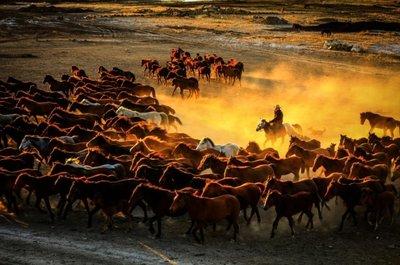 Kayseri'deki yılkı atları görenleri hayran bıraktı