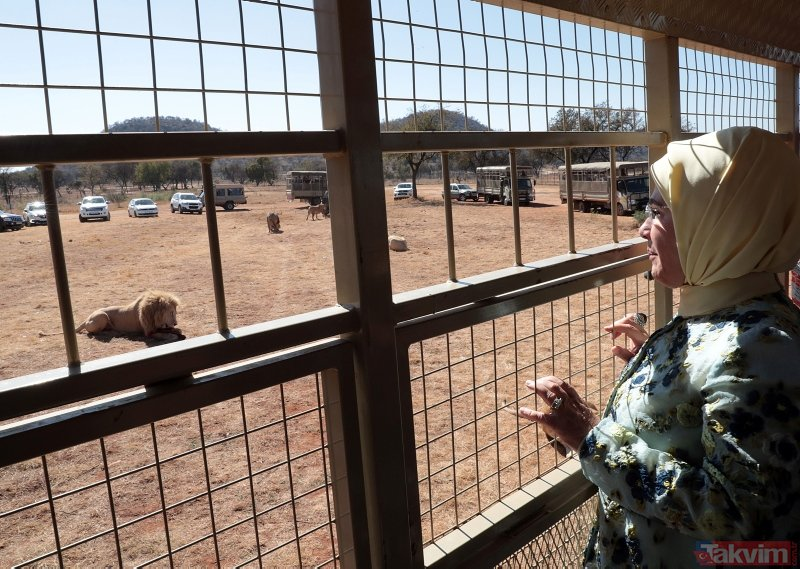 Emine Erdoğan Güney Afrika'da yavru aslan sevdi