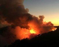 Orman yangınları ile ilgili iddialar ve gerçekler!