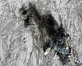 Avusturya'da uçak kazası: Çok sayıda ölü var