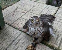 Güvercinlerini öldüren atmacayı yakaladı