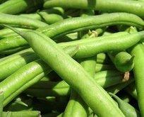 Kolesterole yeşil fasulye