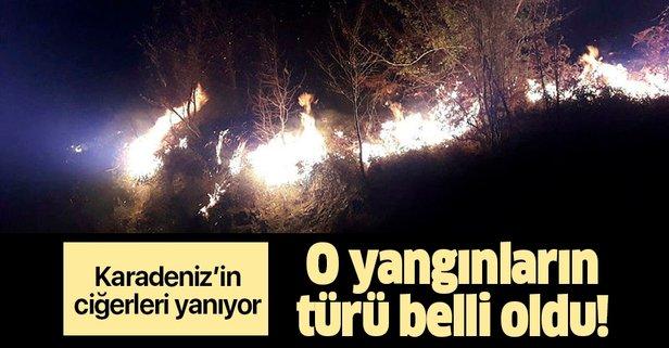 Karadeniz'deki orman yangınları ile ilgili açıklama