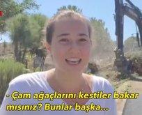 CHP'li belediyeden çevre katliamı!