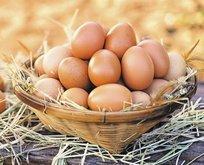Yumurtanın sarısı kemiklerin ilacı
