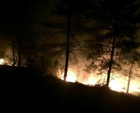 Hatay'da yine orman yangını