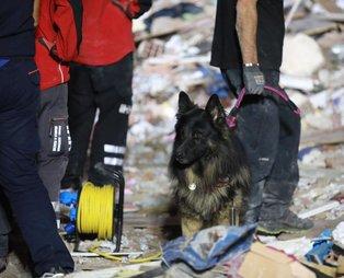 İzmir'deki 6,6 büyüklüğündeki deprem sonrası arama kurtarma köpekleri yine başrolde