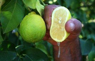 Öyle bir faydası daha ortaya çıktı ki! Eğer limonu sıkıp suyunu...