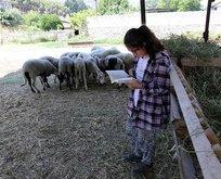 Çoban kızın kitap sevgisi dikkat çekti