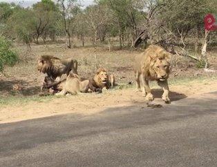 Safaride gördükleri manzara karşısında hayatlarının şokunu yaşadılar