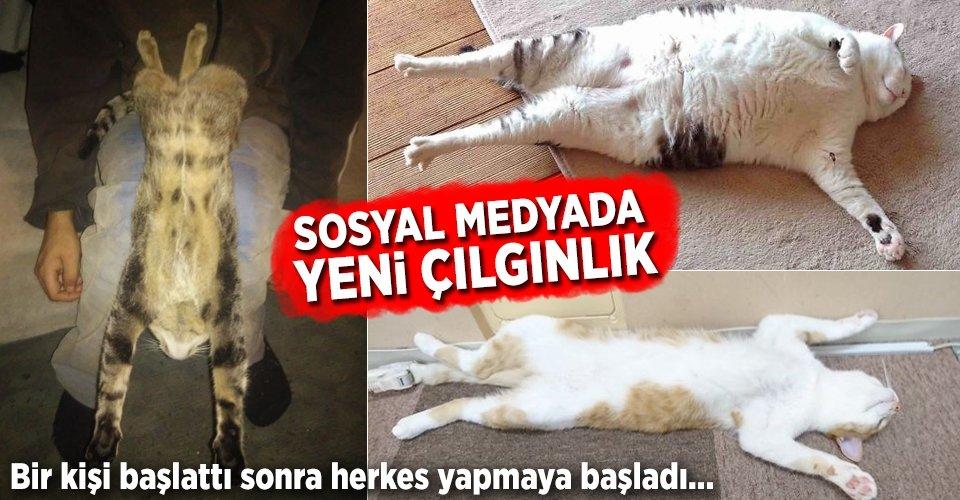 Yeni trend: Esneyen-gerilen kediler