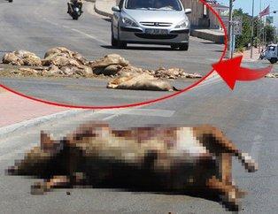Antalya'da şok görüntü! TIR'dan caddeye döküldü...