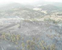 2,5 hektar ormanlık alan yandı