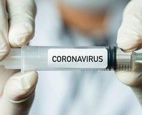 Koronavirüste 'BCG' dönemi
