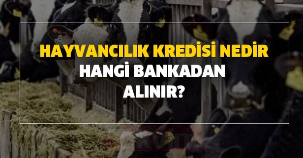 Hayvancılık kredisi nedir, hangi bankadan alınır?