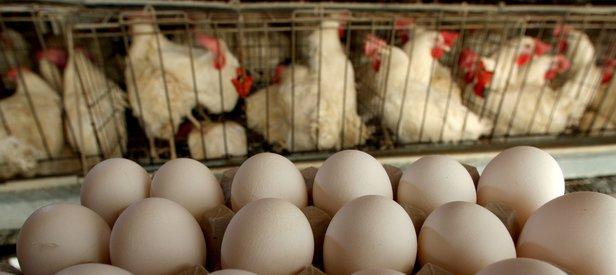 Türkiyede fipronilli yumurta tespit edilmedi