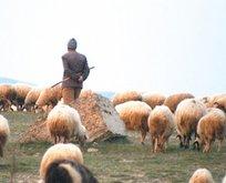 Uçuruma düşen çoban kurtarıldı